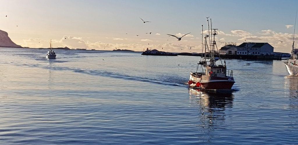 Fiskebåter på vei til kai i Røst etter nok en dag på sjøen.