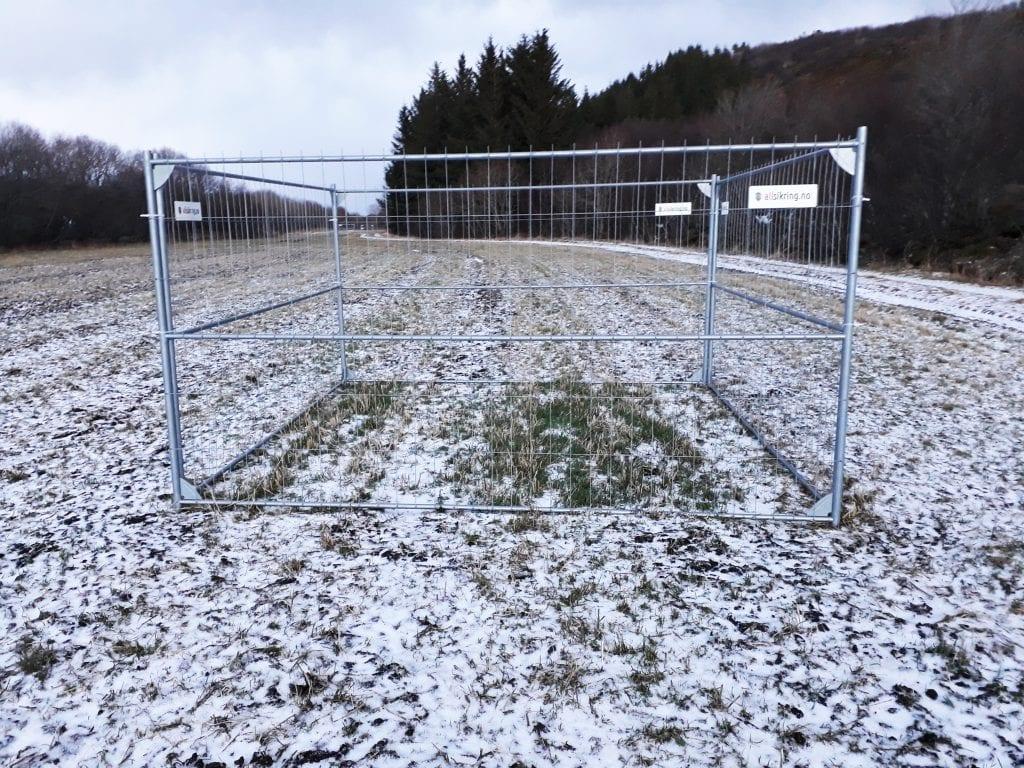 Bønder fortviler over rein på vinterbeite på ytre Helgeland. Nå er Nibio-forskere i gang med et prosjekt som ser på om vinterbeite fører til redusert grasavling.