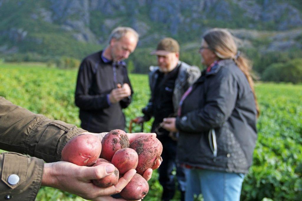 Jostein Skaga representerer Nord-Norge i tidenes første NM i potetdyrking.