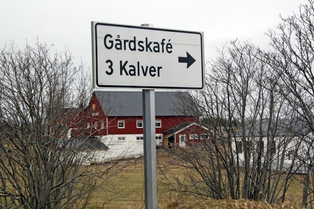 3 Kalver på Solfjellsjøen er ett eksempel på at gårdsrift og reiseliv kan kombineres.
