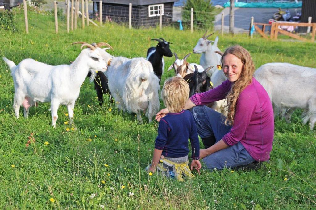 Geitene har tatt turen fra Alstahaug, og har vært på Sjøbakken noen dager. Men Anette Jåstad, sønnen Alvin og resten av familien, viser også fram hest, alpakka, sau og andre dyr på søndagen arrangement.