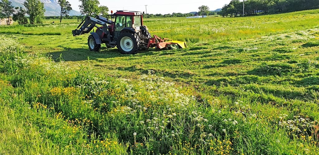 Årets førsteslått ga avlingstap for mange helgelandsbønder.