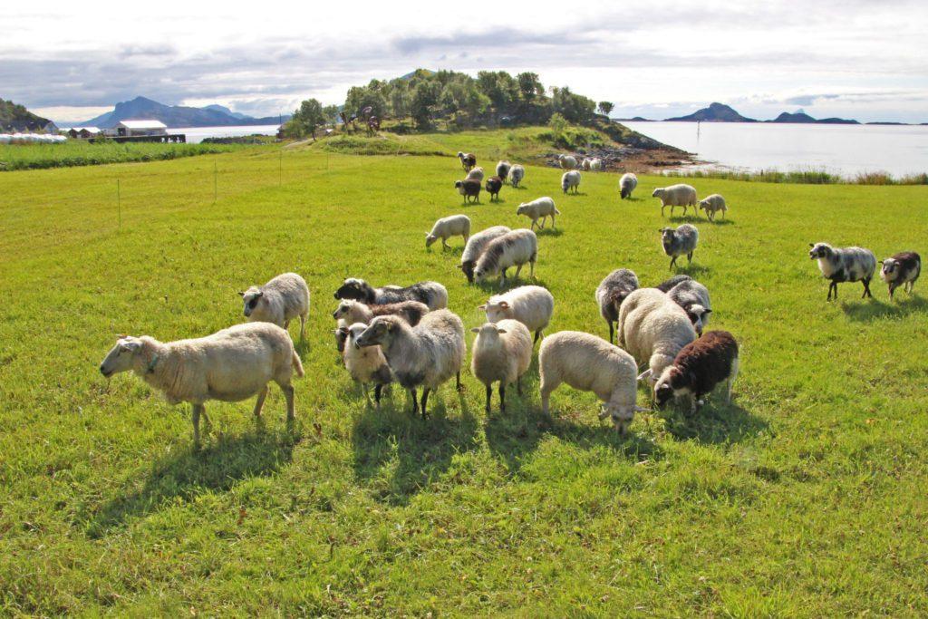 Indre Helgeland regionråd støtter #bondeopprør 21.